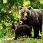 mama bear large family
